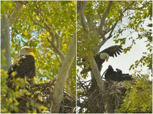 Eagles at Scottsdale golf course